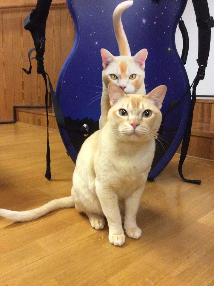 Star Cat On A Cello Case